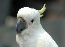 Тревога из-за попугая в Волгограде