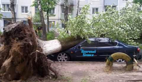 Буря в Брянске 27 июля ломала деревья