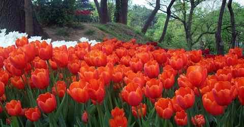 Россия ввела запрет на ввоз цветов из Нидерландов