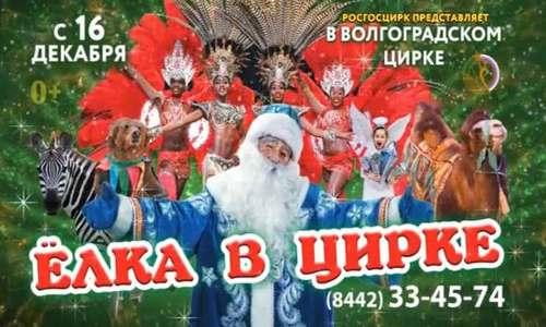 Новогоднее представление в цирке Волгограда