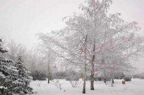 С 26 по 31 января в Волгограде установятся сильные морозы