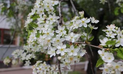 День весны и труда отмечается 1 мая: поздравления в стихах и прозе, прикольные смс-пожелания