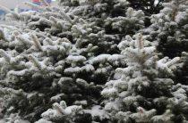 Дед Мороз, путешествующий по России в преддверии новогодних праздников, объедет Волгоград стороной