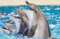 Волгоградцы подписывают петицию против открытия в городе дельфинария