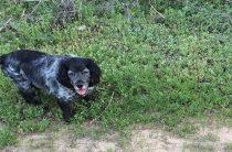 Утвержден список потенциально опасных собак, выгуливать которых можно только в наморднике и на поводке